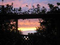 Sunset last night thru back gate