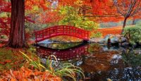 Autumn red footbridge Japanese garden