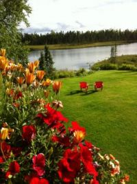 BACKYARD IN SOLDOTNA, ALASKA