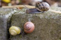 SNAILS OF A DIFFERENT COLOR...