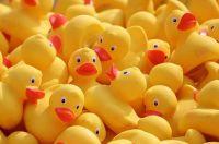 Ducks & Jokes Galore