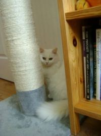 Freya - A kitty and her pole...