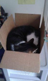 Its a box thing