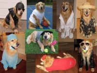 Dress Your Pet Collage