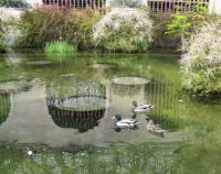 Balboa Park - Ducks and Reflections