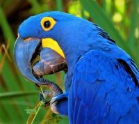 Parrot at Brevard Zoo-Theme Blue