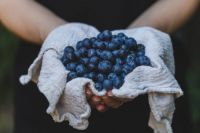 blueberries-in-hand.