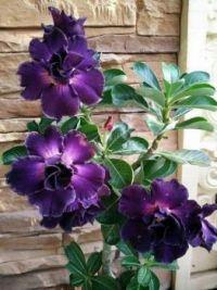 virág (1)
