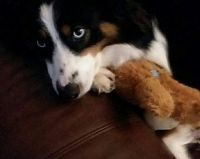 Arya with her teddy bear