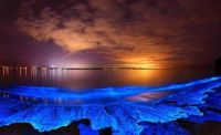 Bioluminescence in phytoplankton making the sea glow at night