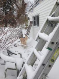 Snow covered ladder
