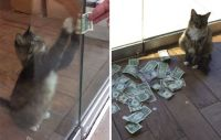 """Cat """"steals"""" money for charity..."""