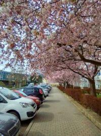 Jarní ulice u nás
