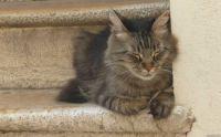 Cica a lépcsőn