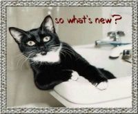 What's new Pussy Cat?