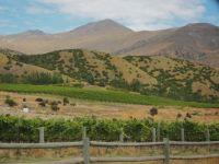 Into Otago