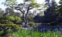 Kenroku-en Garden, Japan  (22)