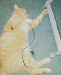 Pumpkin, the cat-pixie
