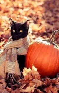 Black cat, orange pumpkin