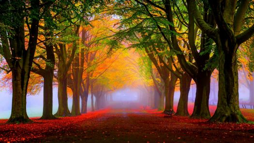 colorfultrees