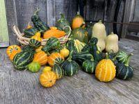 More Gourds