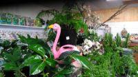 Flora & Leaf Nursery