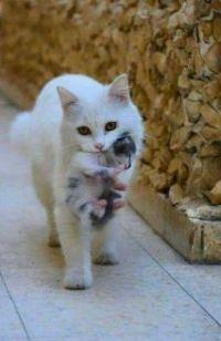 mum and her baby