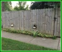 A two dog fence
