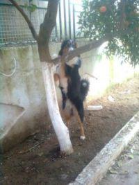mimis is behind the tree