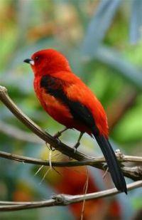Beautiful Birds - No 44