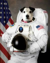 Ground Control to Blackie the Dog