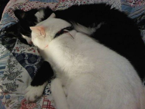 My cat Mr Francis cuddling with his best friend Dexter on my bedspread