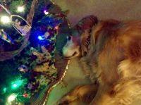 SOPHIE UNDER THE XMAS TREE