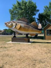 Mille Lacs Lake June 2021 Fish