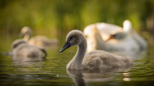 Is this the ugly duckling?