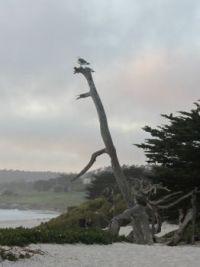 Monterey, CA USA