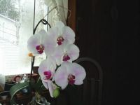 Orchid1 24 Apr 14