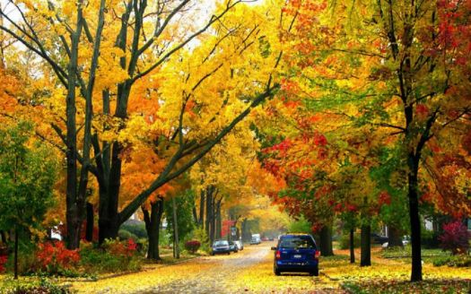 Fall in Ann Arbor Michigan