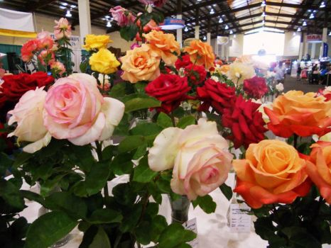 SD County Fair - Stop and Smell the Roses