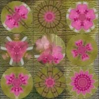 Orchid Kaleidoscopes