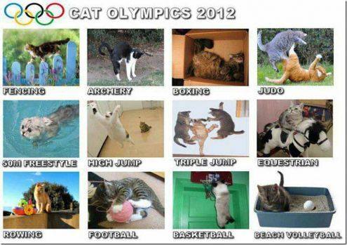 Olympic purring - 50M Freestyle