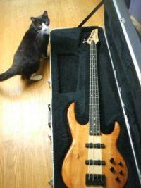 Bass kitty