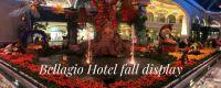 Bellagio Hotel Fall Display