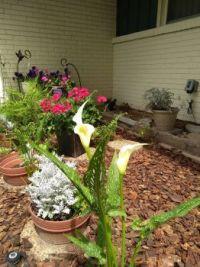 Helen's Remodelled Flowerbed