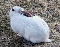 Bunny 2021Mar1-4