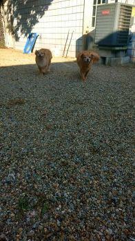 Angel And Xena at Poochies
