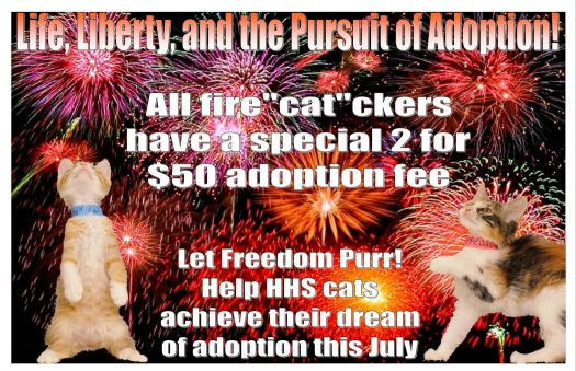 4th of July Cat Poster