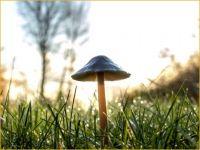 Mushroom Solo