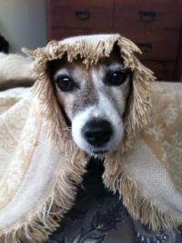 Puppy Teresa