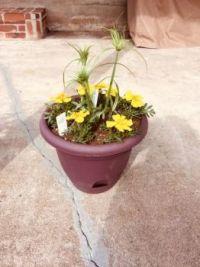 Becky's planter